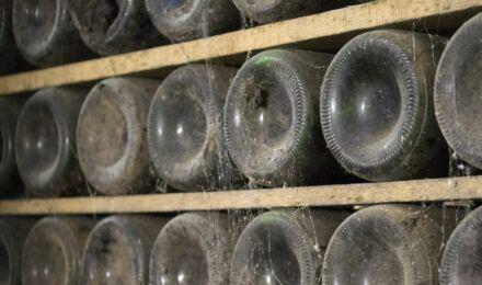 winery-1179256_1920_1550x916_bijgeknipt